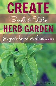 Create an Herb Garden with Kids in your home or classroom! Great resources on gardening and fun extension activities to include with the herb garden!