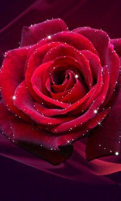 valentine rose message