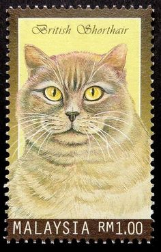 Items similar to British Shorthair Cat -Handmade Framed Postage Stamp Art 17464 on Etsy Pedigree Cats, Postage Stamp Art, Catus, Cat Quotes, British Shorthair, Domestic Cat, Borneo, Asia, Kitty