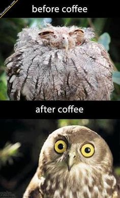 Before Coffee Vs After Coffee | Click the link to view full image and description : )