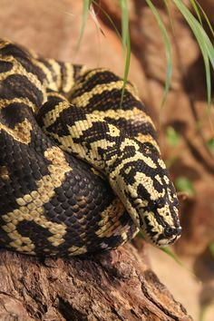 favorite snake at the San Fran Zoo