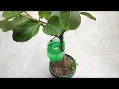 Easy and best self watering system for any plants - YouTube