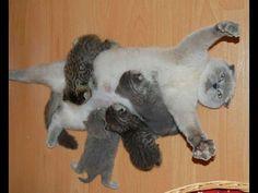 Amor de Madre. Si no dices OHHHHH... NO TIENES CORAZON! Los gatitos mas ...
