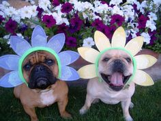 It's Spring! It's Spring! Pull Out the Hats!