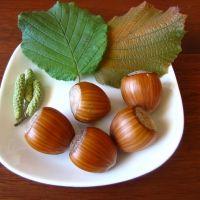 The Hazelnut Ennis is Jumbo Nut, high yielding. Hazelnut Tree, Lotus, Landscaping Trees, Wild Edibles, Permaculture, Acorn, Berries, Fruit