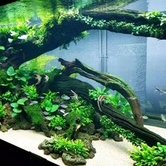'Made in China' 5 Meter tank in Zhengzhou aquascaping