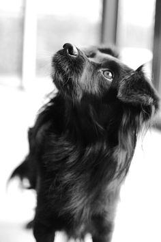 Markiesje #Puppy #Dogs