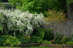Spirée, spirea : planter, tailler, entretenir - Nos conseils - Blog Promesse de fleurs