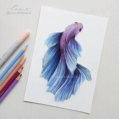 Betta Fish: 2 -I worked on this one the other day, finally I had a free moment to finish it. I really love drawing these guys, its very relaxing.