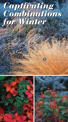 To look at winter gardening in a whole new light, we have compiled a collection of captivating winter combinations. We hope you�ll be inspired to never think of winter as dull again.