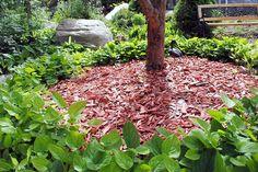 Kevätkaihonkukka - Omphalodes verna