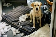 Virtual dog behaviorist, from the SPCA
