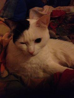 #cat #gatto #love #cute #sweet