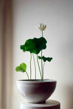 plante d'intérieur, jolie fleur d'intérieur pour bien decorer chez vous