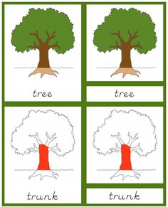 Free Botany Cards for Primary Grades  #homeschool