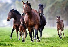 Mares and foals - -so beautiful - - must be Spring!