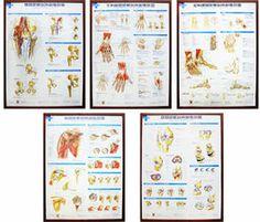 全套完整掛圖原價6500(不含框架)(矯正、中醫、人體脊椎模型、整脊整復頓