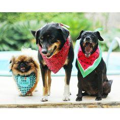 Turminha do barulho #patudos #dogs #pets