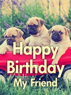 94 Best Animal Birthday Cards Images