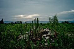 Near Fukushima, a Human Crisis Quietly Unfolds - Slide Show - NYTimes.com