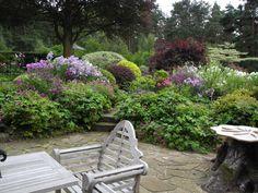 Garden inspiration ideas on pinterest acer palmatum for Garden inspiration ideas
