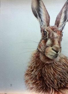 'Stella' Little Man, Rabbit, My Arts, Animals, Bunny, Animaux, Rabbits, Animales, Animal
