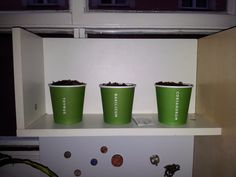 Growing my own herbs for cooking... Ikea style (!)