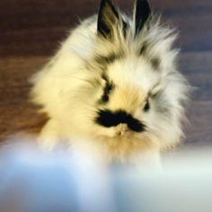 Mustache Bunny :3