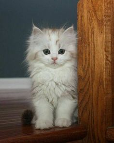 Adorable #Kitten!