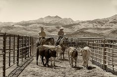 Fine Art Photography Print Rodeo Western Cowboys by AsqewCreative