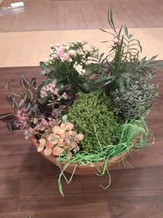 Flowers, Plants, Flora, Plant, Royal Icing Flowers, Flower, Florals, Bloemen, Planting