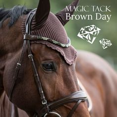 Brown Horse with brown MagicTack browband for horses and brown bridle Brown Horse, Equestrian Style, Photoshoot Inspiration, European Fashion, Dressage, Outfit Of The Day, Your Style, Fashion Accessories, Bling