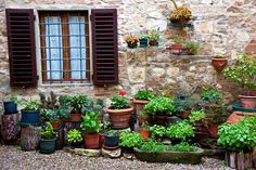 Tuscan patio garden of potted plants and flowers