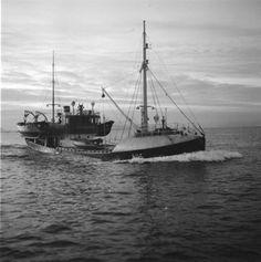 Fiskeflåten. Rogaland. Vågholm R-11-S. Sailing Ships, Flora, Boat, Pisces, Dinghy, Plants, Boats, Sailboat, Tall Ships