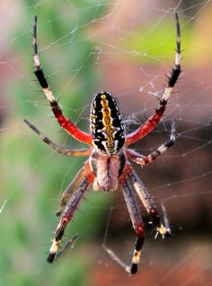 a spider in Oaxaca, the good kind, like Charlotte.  She eats mosquitos (always a good thing)