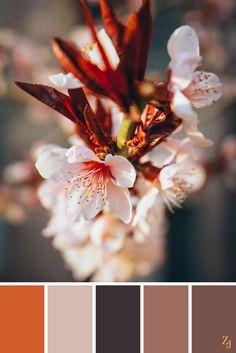 ZJ Colour Palette 101 #colourpalette #colourinspiration