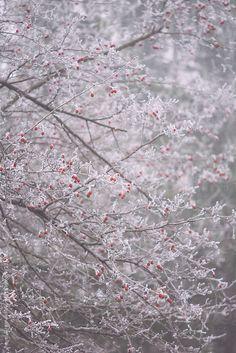 Albero di biancospino congelato da Pavelgr   Stocksy Stati