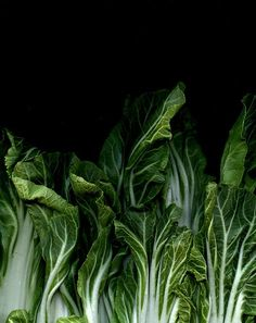 Bok Choy, food photography, food styling