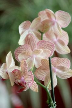 Orchids...one of my favorite flowers! :)