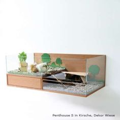 Guinea pigs have probably never seen such luxury. These posh wood and glass, ultra modern rodent homes designed by Gudula Jäckle will leave even the most refined guinea pig feeling sophisticated