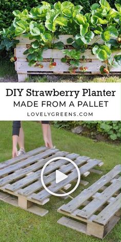 How to build a Strawberry Planter using just a single wood pallet. It takes an afternoon to build and allows you to grow strawberries raised off the ground and on patios sculpture ideas diy water features How to make a Strawberry Pallet Planter Strawberry Planters Diy, Strawberry Garden, Strawberry Patch, Strawberry Plants, Diy Planters, Planter Garden, Planter Boxes, Herb Garden, Pallet Planters