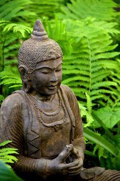 Buddha amongst ferns