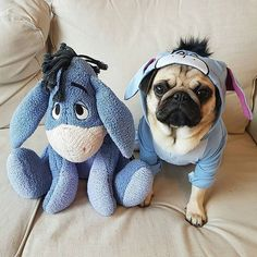 Twinning at its best! Photo by @its.louis.the.pug Want to be featured on our Instagram? Tag your photos with #thepugdiary for your chance to be featured.