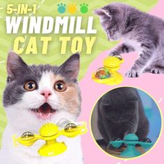 🤩Making your Cats more Cuddly, Friendly, and Affectionat,Windmill Cat Toy 5-in-1 Cute Cats, Funny Cats, Cat Activity, Cat Hacks, Interactive Cat Toys, Cat Costumes, Cute Baby Animals, Pet Care, Cats And Kittens