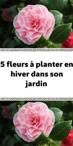 Jungle Flowers, Comment Planter, Planters, Nature, France, Permaculture, Grasses, Bio, New York
