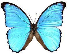 Les beaux papillons - Page 2 - Forum Algerie - forum algérien de rencontre et de débat