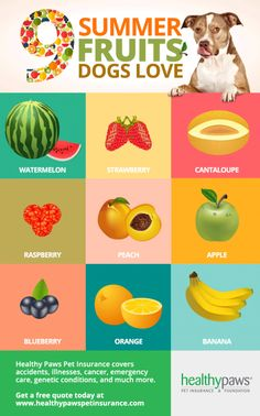 Can dogs eat strawberries and bananas? Here are 9 Summer fruits that are safe for dogs and that they absolutely love. Can Dogs Eat Bananas, Foods Dogs Can Eat, Can Dogs Eat Strawberries, Can Dogs Eat Oranges, Homemade Dog Treats, Healthy Dog Treats, Doggie Treats, Dog Snacks, Healthy Sweets