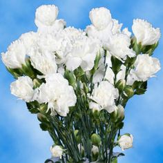 19 best carnations oh my images on pinterest white carnation cheap white spray carnation flowers mightylinksfo