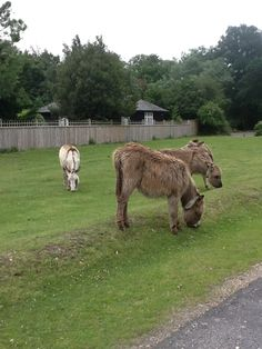 Not as nice as they look.....a friend got chased by one of those donkeys!