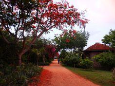 Eco Dune resort, Pondicherry